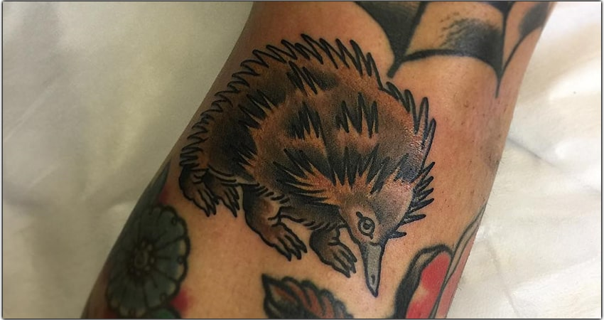 Echidna Tattoo Ideas In 2021 – Meanings, Designs, And More
